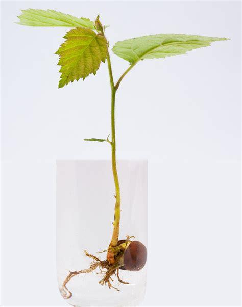 Nutris Unt Daun Akar Buah Bunga2bungkus gambar pohon air cabang menanam udara bunga makanan hijau herba menghasilkan makro