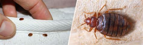 entreprise desinfection punaises lit 4351 entreprise d 233 ratisation anti souris et d 233 sinfection bruxelles