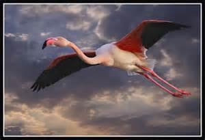 beachcombers cove flying flamingo friday