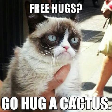 Grouchy Cat Meme - 10 new grumpy cat memes