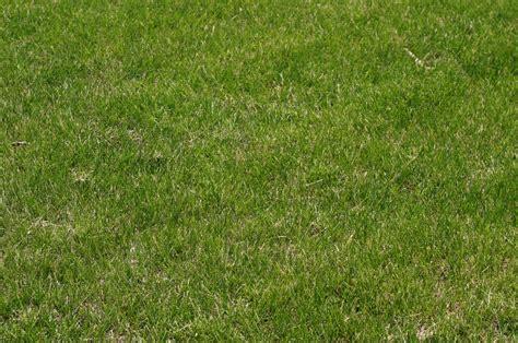 sketchup vray grass rendering tutorial vray grass material global business forum iitbaa