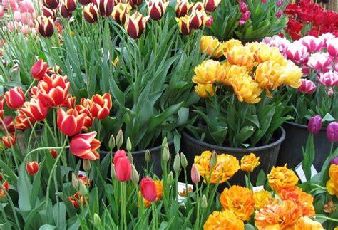 mercato dei fiori roma prezzi mercato dei fiori turismo roma