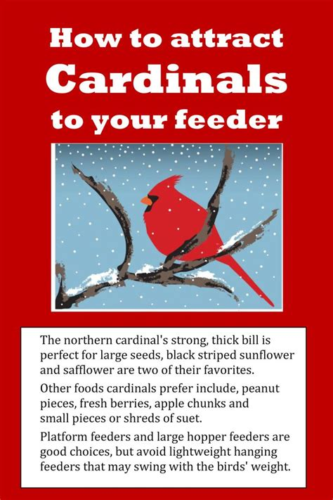 How To Attract Cardinals To Your Feeder how to attract cardinals to bird feeder woodworking projects plans