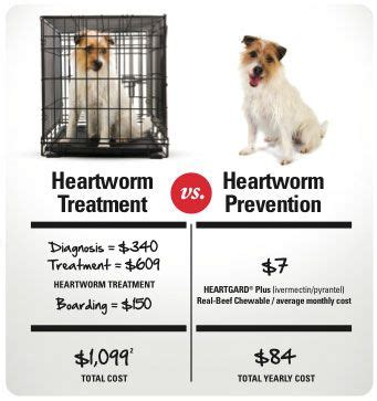 heartworm treatment heartworms in dogs myths vs facts cesar millan care and the o jays