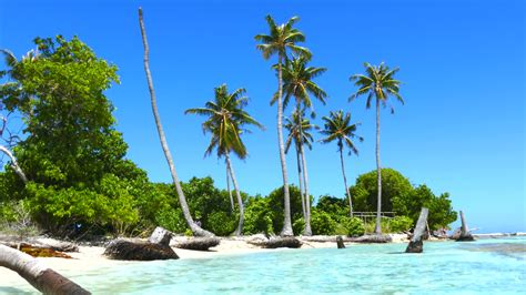with palm tree island picture of palm trees on an island newwallpapers org