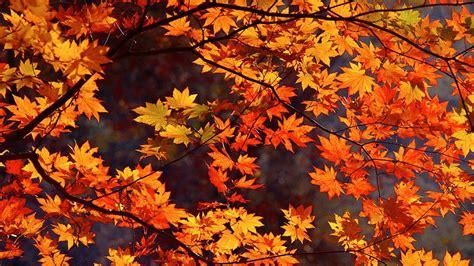 Kostenlose Bilder Herbst by Autumn Wallpaper For Mac Wallpapersafari