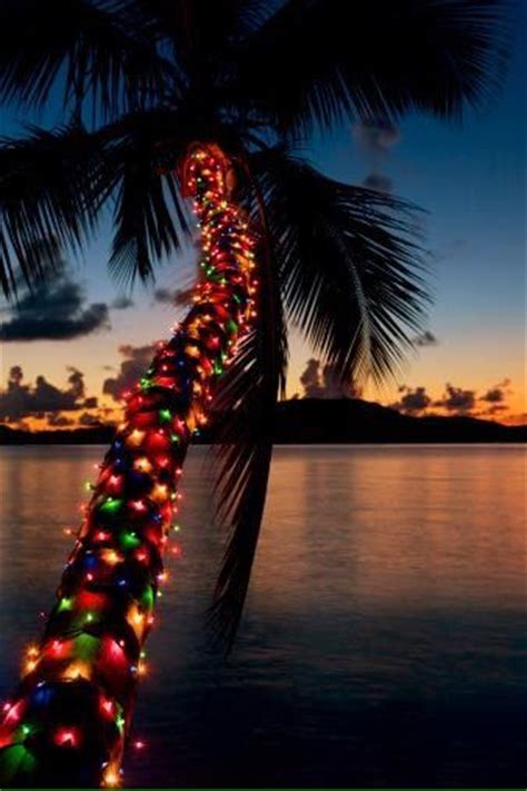 houses with christmas tree lites in palm springs caribbean style tobago caribbean caribbean