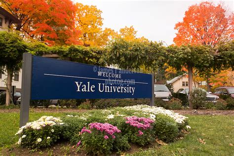 yale colors yale colors reborn revived renewed a journey through the