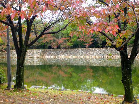 beautiful parks  tokyo