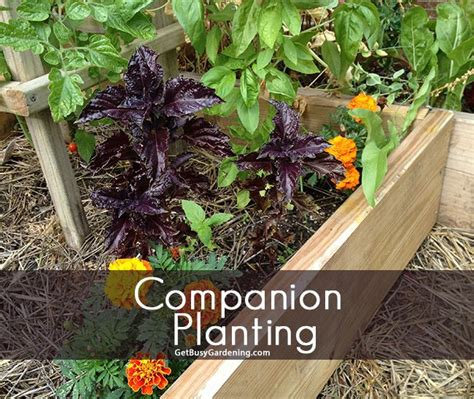 Garden Companion Planting by Companion Planting Places Spaces Gardening