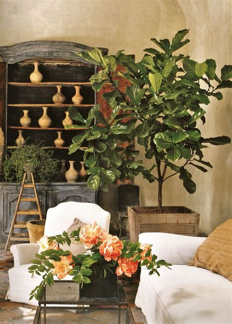 great indoor plants great indoor plants green love pinterest