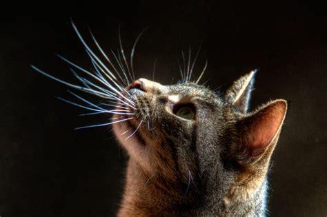 Cat S Whiskers The Pet Product Guru