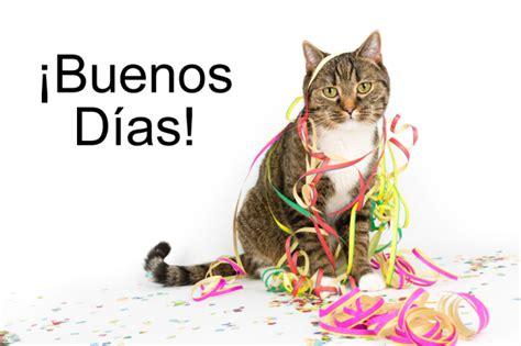 imagenes animadas d buenos dias con animalitos lindos gatitos con frases lindas de buenos dias en im 225 genes
