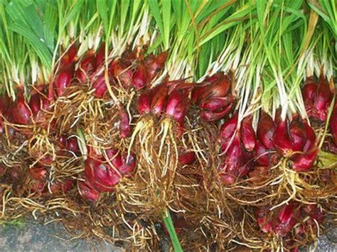 obat herbal  jamu tradisional  segala macam
