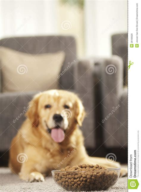 puppy can t can t wait to eat his food royalty free stock images image 26169329