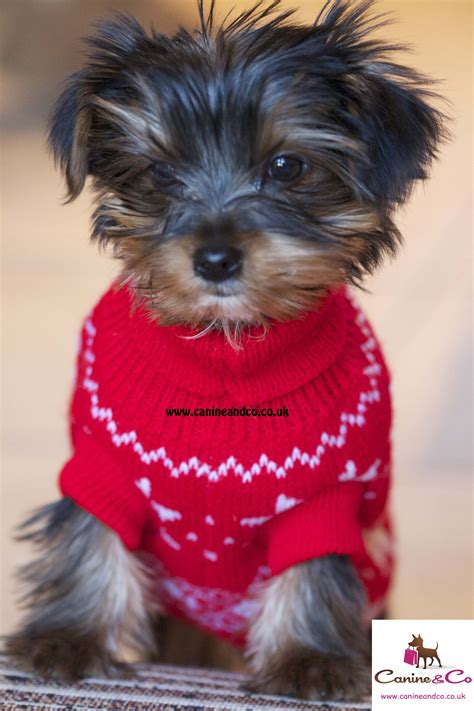 sweaters for yorkies yorkie puppy sweaters