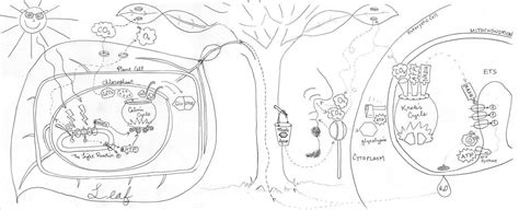 Photosynthesis Colouring Pages Gekimoe 73507 Photosynthesis Coloring Pages