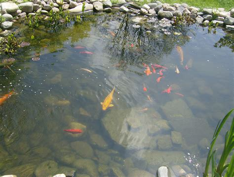 is a pond right for your garden the skip company