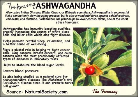 ashwagandha before bed 129 best ashwaganda stress herbs images on pinterest