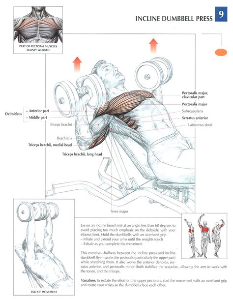incline bench press muscles worked 100 incline dumbell bench akonza adjustable bench incline flat decline press