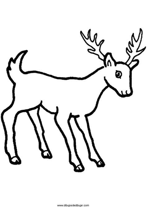 imagenes para colorear venado dibujos de ciervos para colorear e imprimirdibujos de dibujar