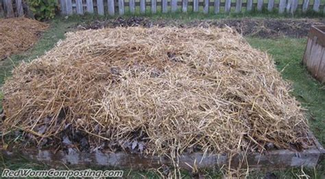 worm bedding winter worm composting windrow red worm composting