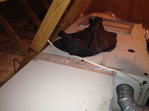 living in the attic ex boyfriend living in attic discovered 12 years after