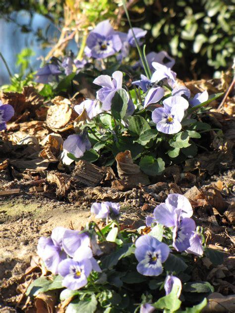 Garten Pflanzen Oktober by Im Oktober Pflanzen Paradiesgarten Maag