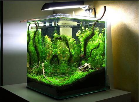 design aquascape murah ide kreasi membuat mini aquascape atagaleri net