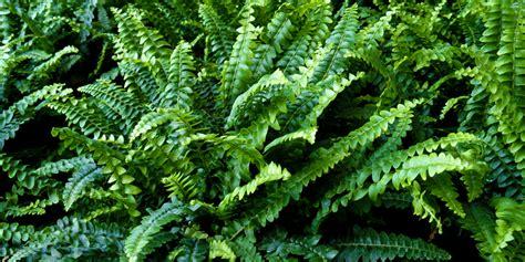 home luchtzuiverende planten