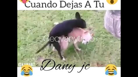 imagenes para whatsapp de risa descargar videos de risa para facebook y whatsapp 2017 youtube