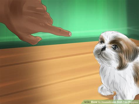 how to housebreak a shih tzu puppy 3 ways to housebreak shih tzu puppies wikihow