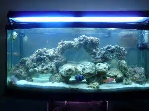 marine tank aquascaping faqs about aquascaping marine systems 2