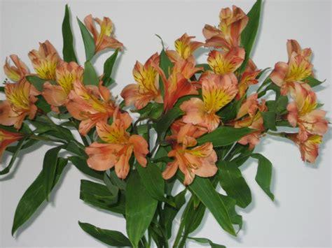 how long do flowers last long lasting cut flowers hgtv