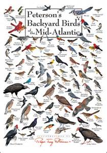 peterson s backyard birds of the mid atlantic poster