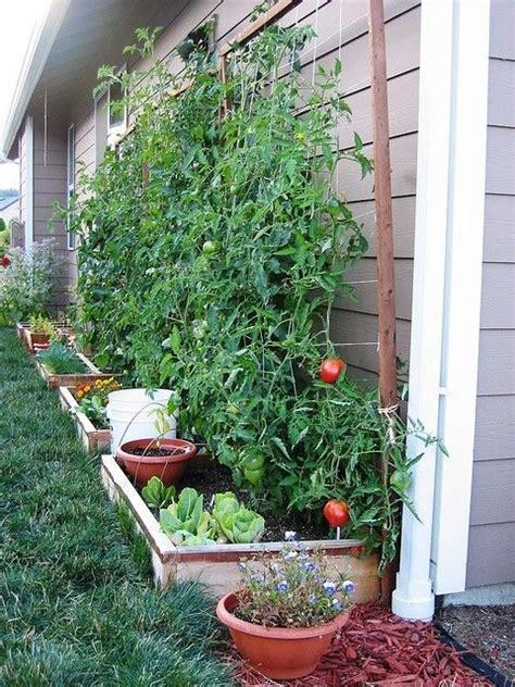 Wall Vegetable Garden Mini Vegetable Garden Along A Foundation Wall I Do A