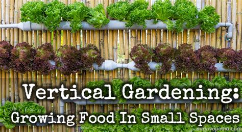 how to grow a vertical vegetable garden vertical gardening growing food in small spaces