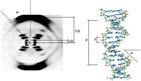 how to interpret x ray diffraction pattern the importance of hydration and dna conformation in