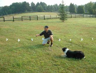 underground fence installation how to install an underground fence breeds picture