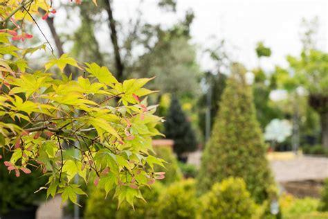 offerte piante da giardino piante da giardino e esterno garden roagna vivai cuneo