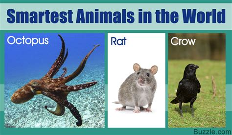 the smartest in the world smartest animals in the world that will leave you dumbfounded