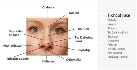 diagram of nose nose revision surgery and surgeons december 2010