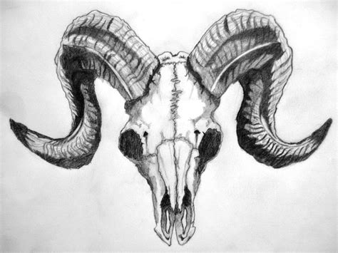ram skull tattoo ram skull by codycsir on deviantart