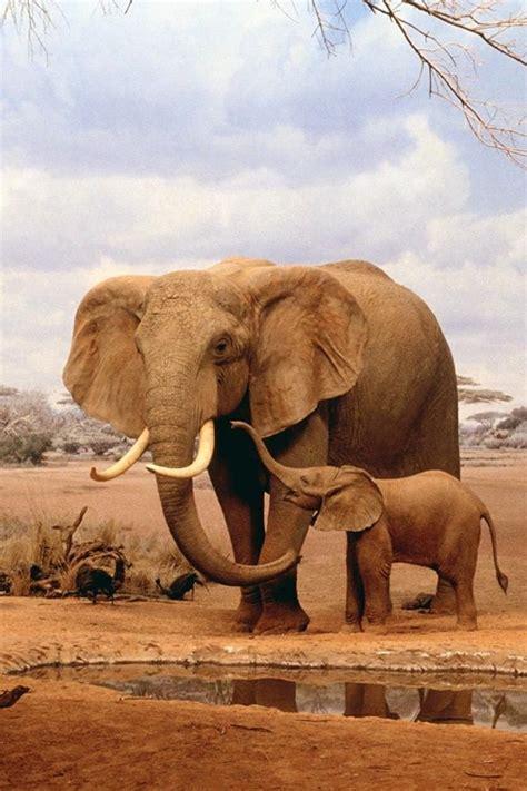 elephant animals beautiful elephant
