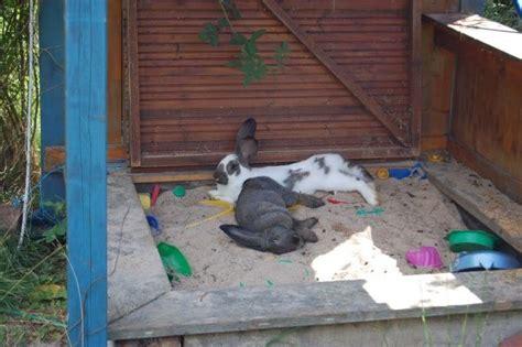 gartenweg anlegen günstig kaninchenstall au 223 en idee