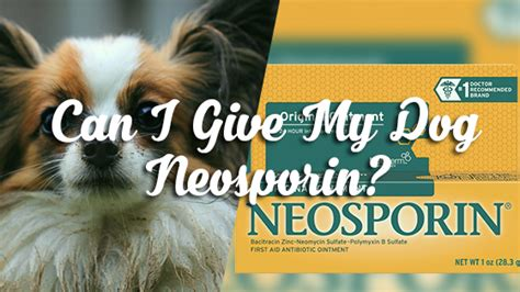 neosporin for dogs can i give my neosporin pet consider