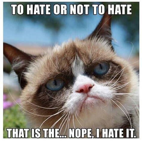 Memes Of Grumpy Cat - funny grumpy cat meme funny dirty adult jokes memes