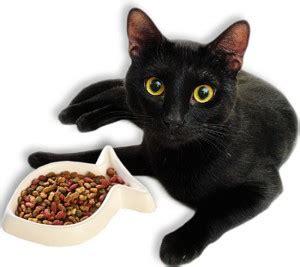 cosa fare in caso di cistite cistite nel gatto