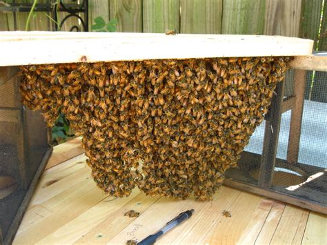 top bar hives in cold climates linda s bees so how s topsy the top bar doing