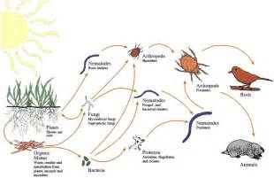 Soil food web opening the lid of the black box